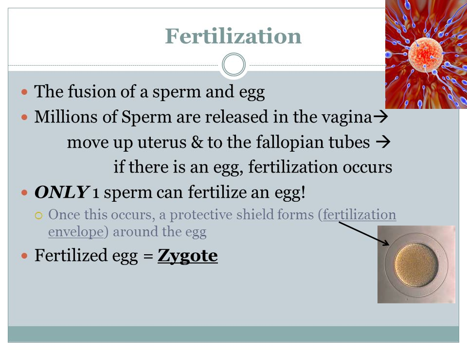 Texas dildo can you tell when a sperm fertilizes an egg teach fuckin photos