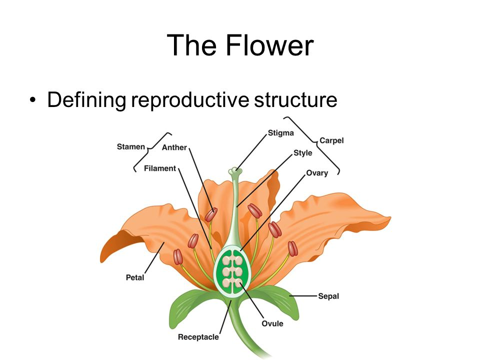 The Flower Defining reproductive structure