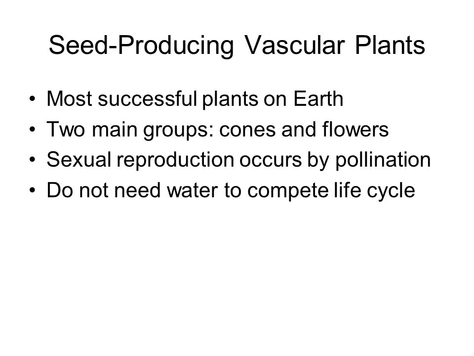 Seed-Producing Vascular Plants