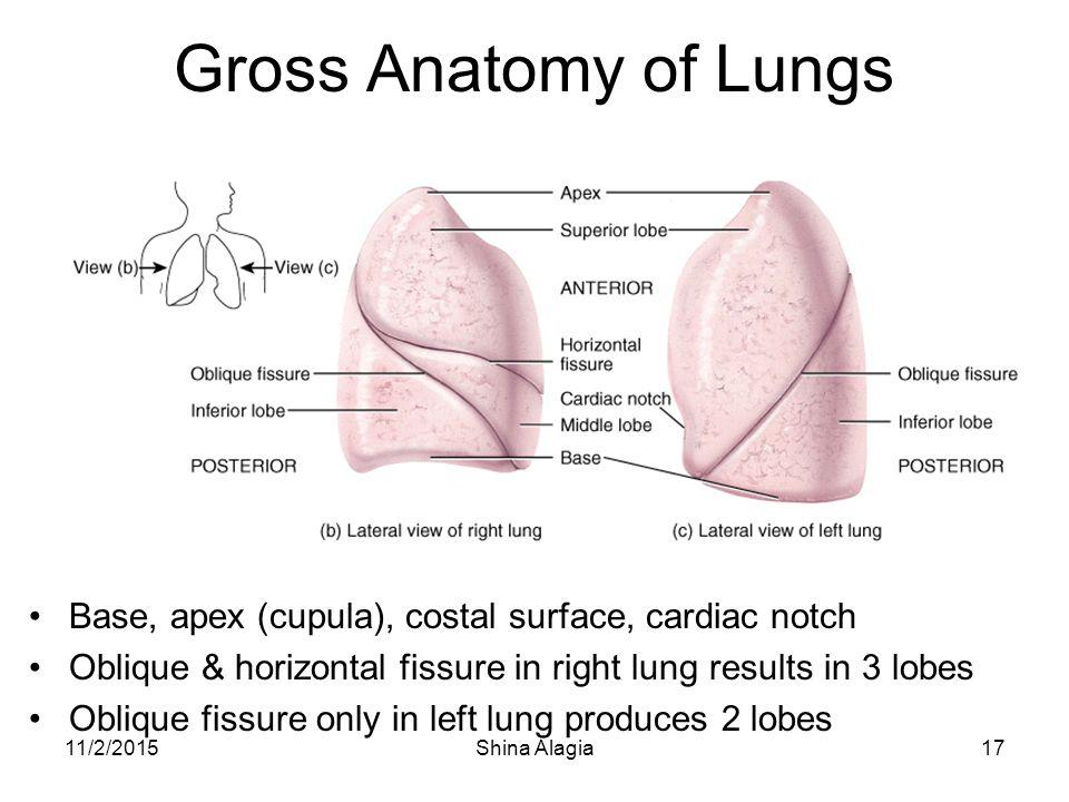 Respiration. Ontogenesis of respiration. - ppt video online download