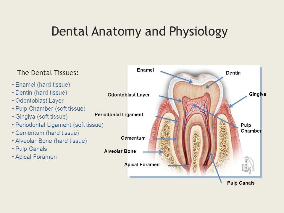 Is Human Anatomy Hard Images - human body anatomy