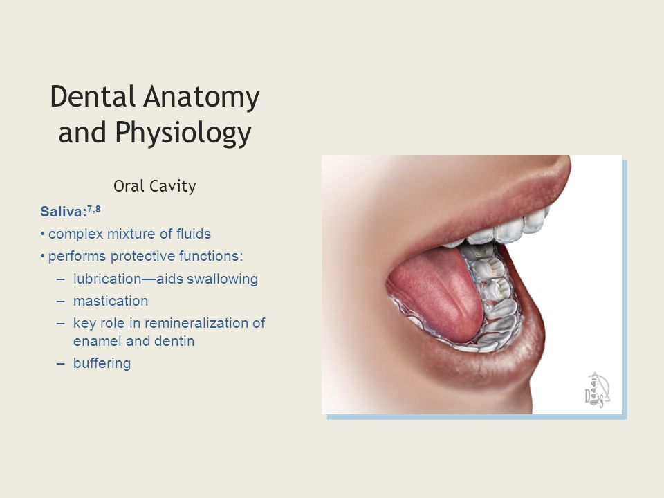 Fancy Oral Anatomy Ensign - Anatomy And Physiology Biology Images ...