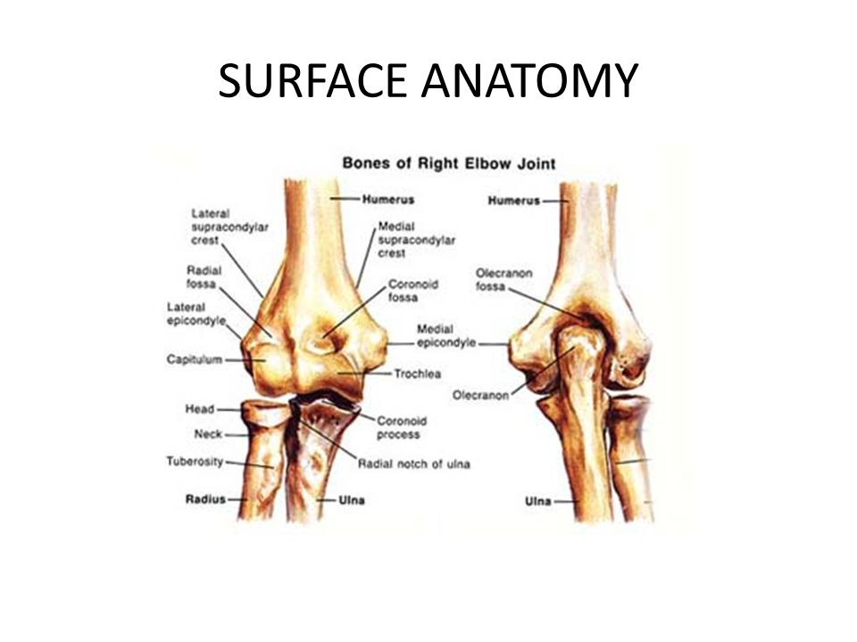 Humeroulnar Joint Commonly Known As The Elbow Joint Ppt Video