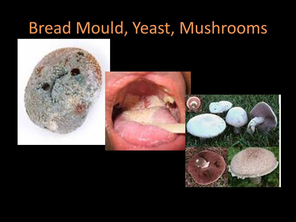 Section 3 3 Fungus Kingdom - ppt video online download