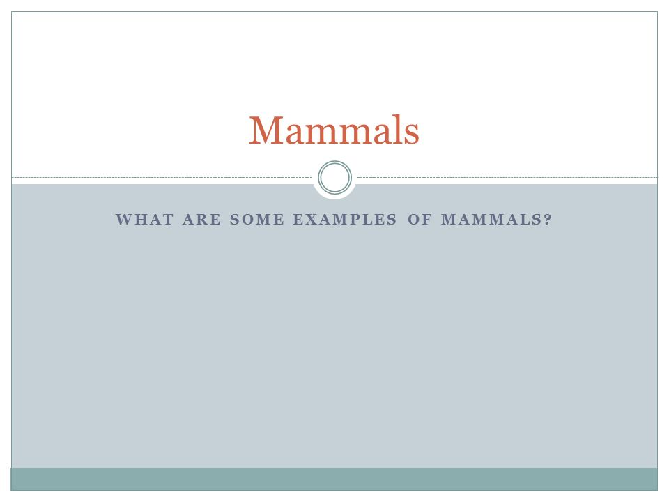 What Are Some Examples Of Mammals Ppt Download