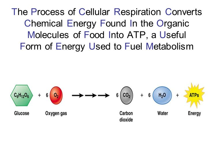 Chemical Energy Stored In Food Molecules Is Released Through