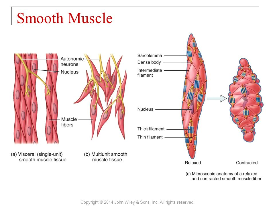 Principles Of Anatomy And Physiology Ppt Video Online Download