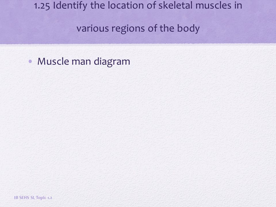 The Muscular System Topic Ppt Download