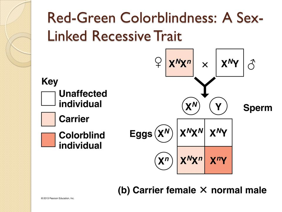 recognition of patterns of trait inheritance Patterns of inheritance in humans include autosomal dominance and recessiveness, x-linked dominance and recessiveness, incomplete dominance, codominance, and lethality a change in the nucleotide sequence of dna, which may or may not manifest in a phenotype, is called a mutation.
