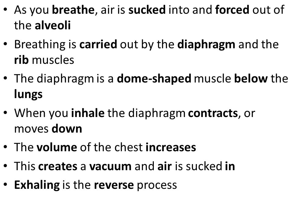 As you breathe, air is sucked into and forced out of the alveoli