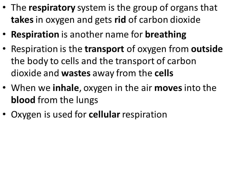 The respiratory system is the group of organs that takes in oxygen and gets rid of carbon dioxide