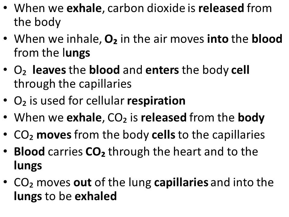 When we exhale, carbon dioxide is released from the body