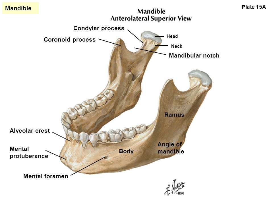 Sex Dependent Mechanical Properties Of The Human Mandibular Condyle