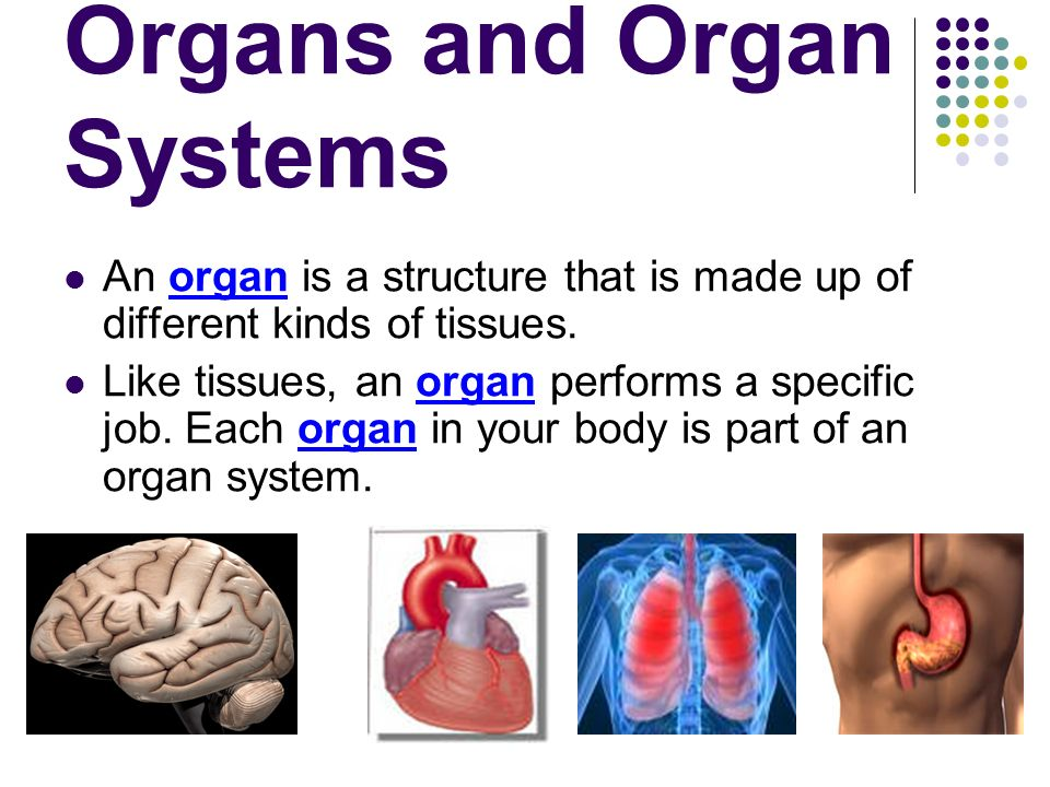 How Is The Body Organized Ppt Video Online Download