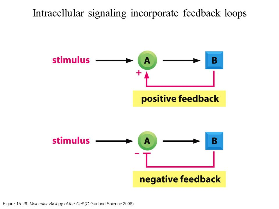 incorporating feedback Troponyms (each of the following is one way to incorporate): fold (incorporate a food ingredient into a mixture by repeatedly turning it over without stirring or beating) reintegrate (integrate again.