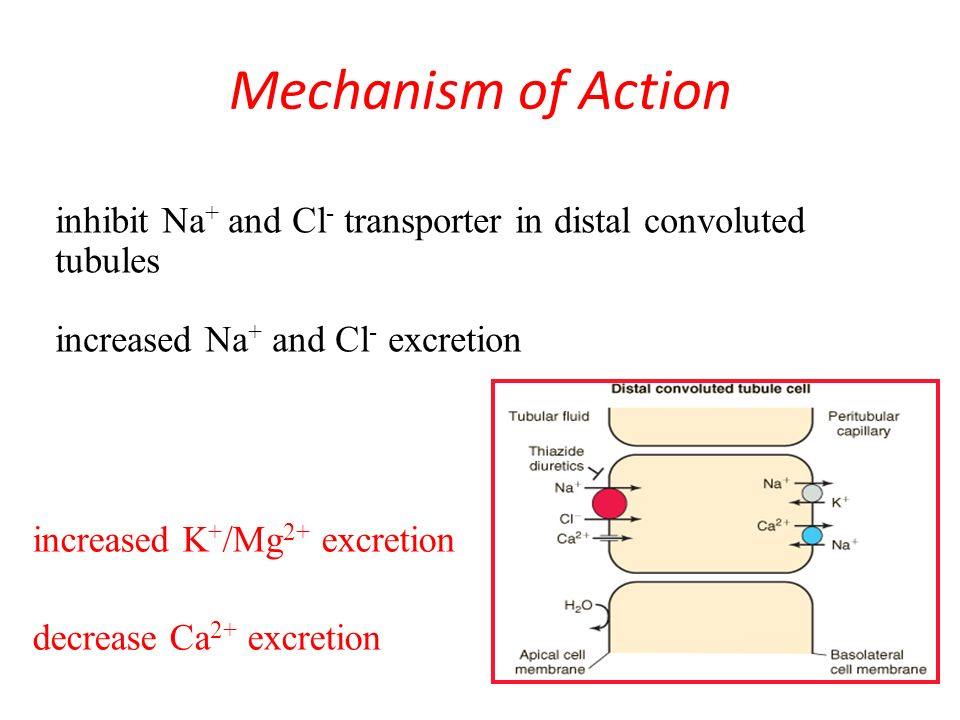 adipex mechanism of action