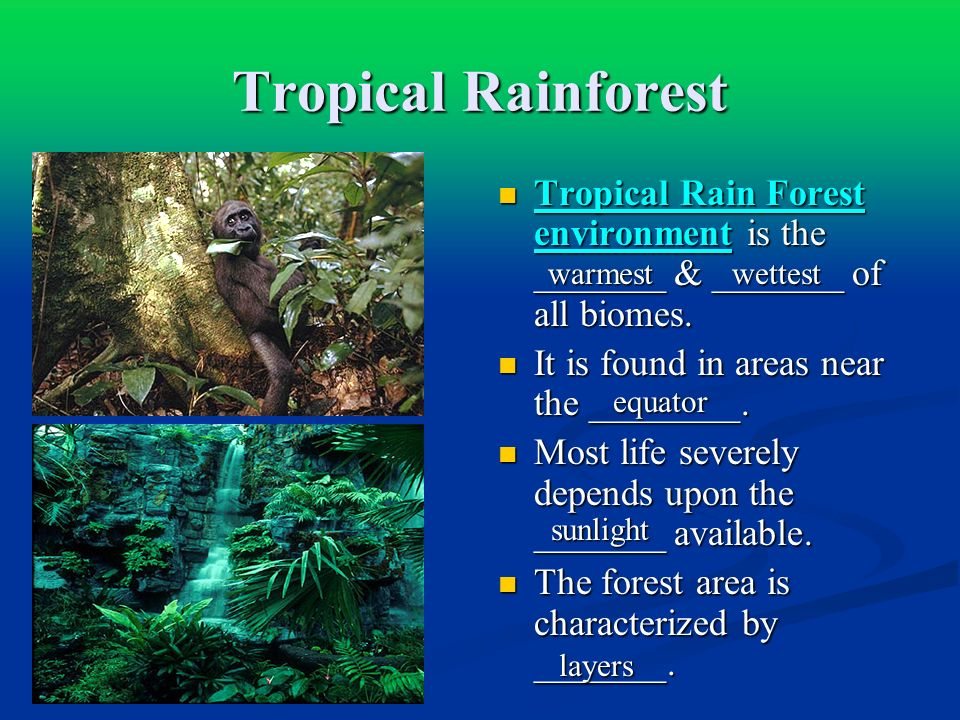 Tropical Rainforest Tropical Rain Forest environment is the _______ & _______ of all biomes. It is found in areas near the ________.