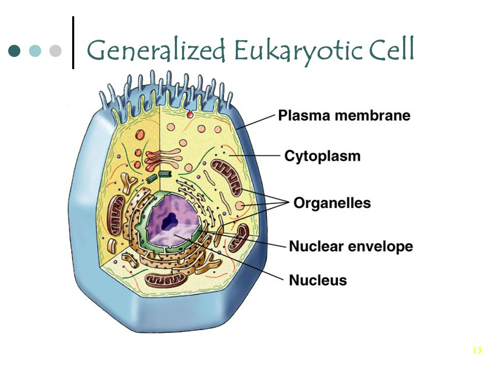 Generalized Eukaryotic Cell Wiring Diagrams