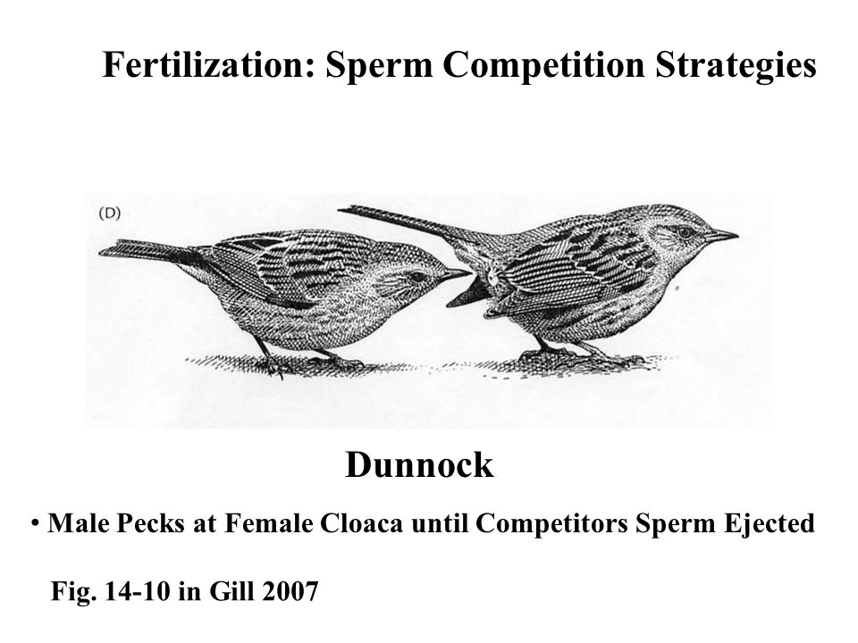 Sperm competition from various avian males