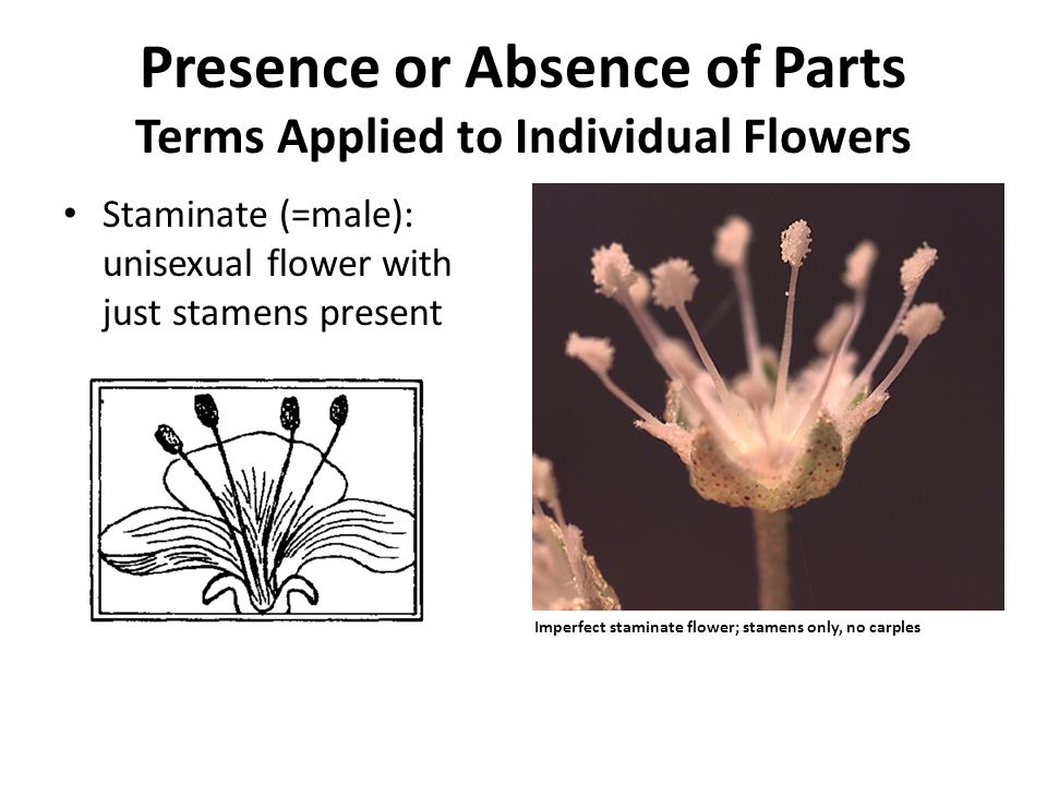 Unisexual flower diagrams