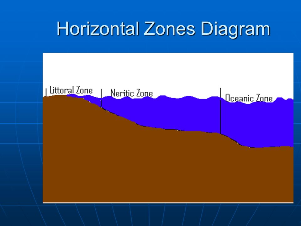Ocean Zones Ppt Download