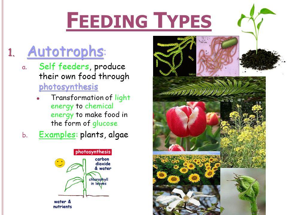 Feeding Types Autotrophs Ppt Download