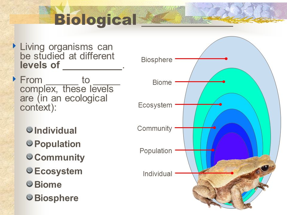 Organization trophic levels cycles biomes succession ppt 13 biological ccuart Images