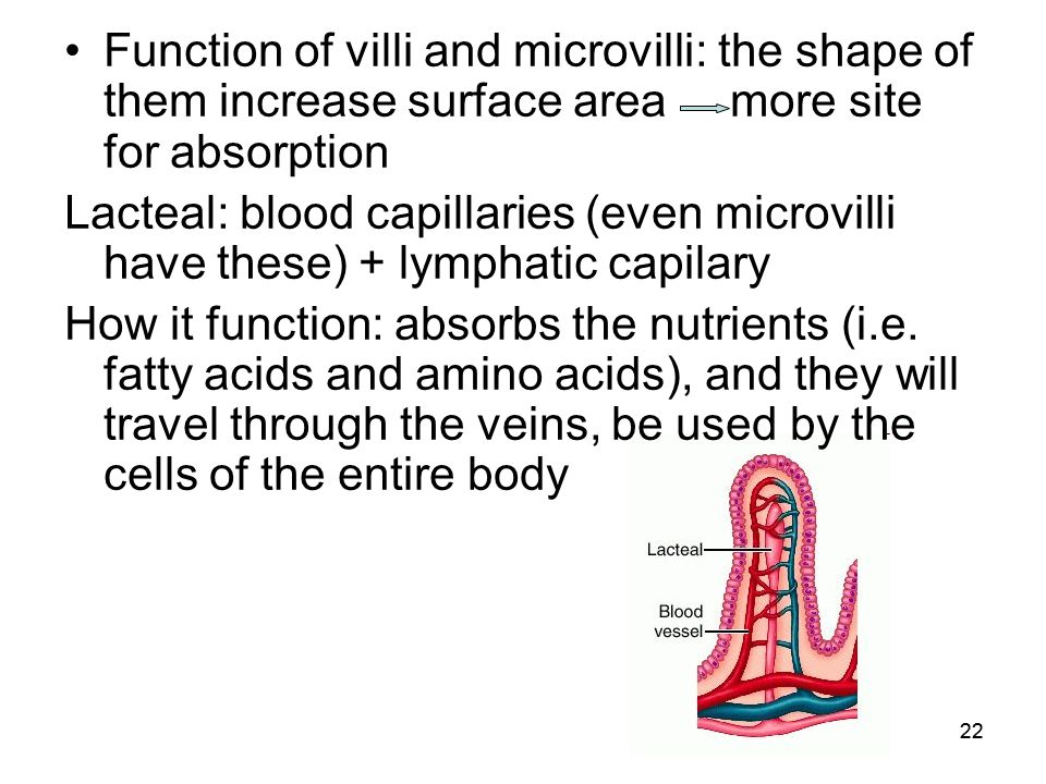 travel brochure of the digestive system