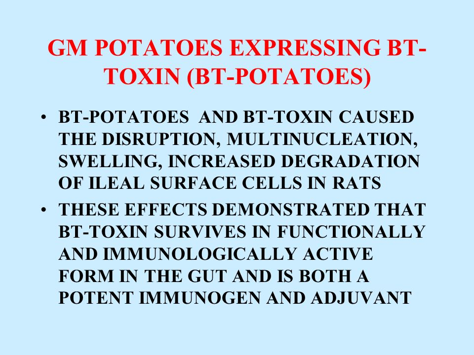 GM POTATOES EXPRESSING BT-TOXIN (BT-POTATOES)
