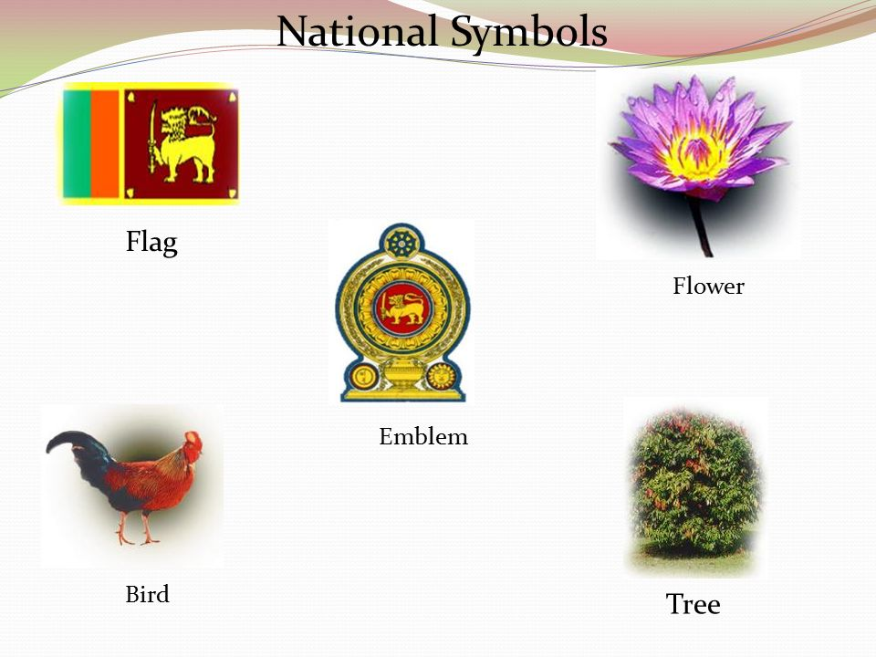 national symbols National symbols of india depict a certain virtue that is distinctive characteristic of the country through this essay, let's have a look at the various national symbols of india and their significance.