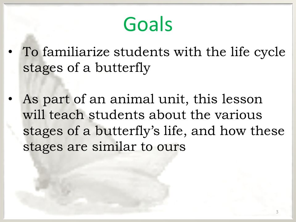 life process of butterfly