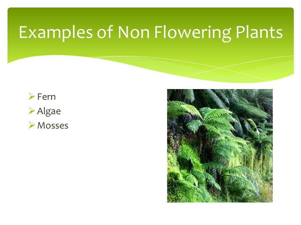 Classifying Plants And Animals Ppt Video Online Download