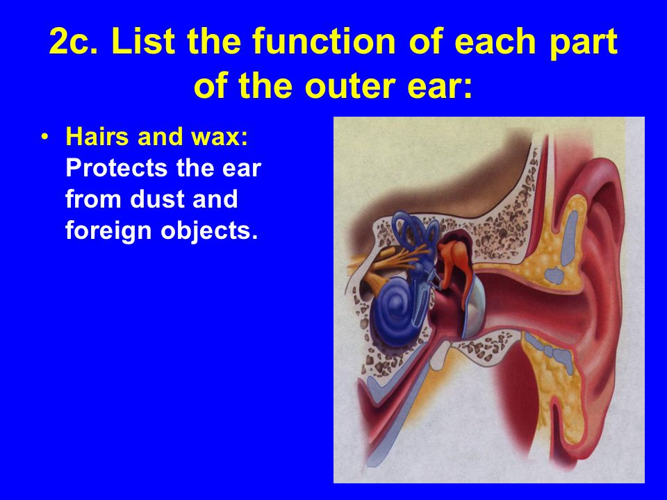 Guided Reading Activity 53 Ears and Hearing Protection - ppt video ...