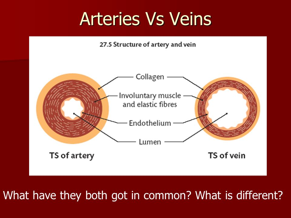 Open Vs Closed Circulatory System Ppt Video Online Download