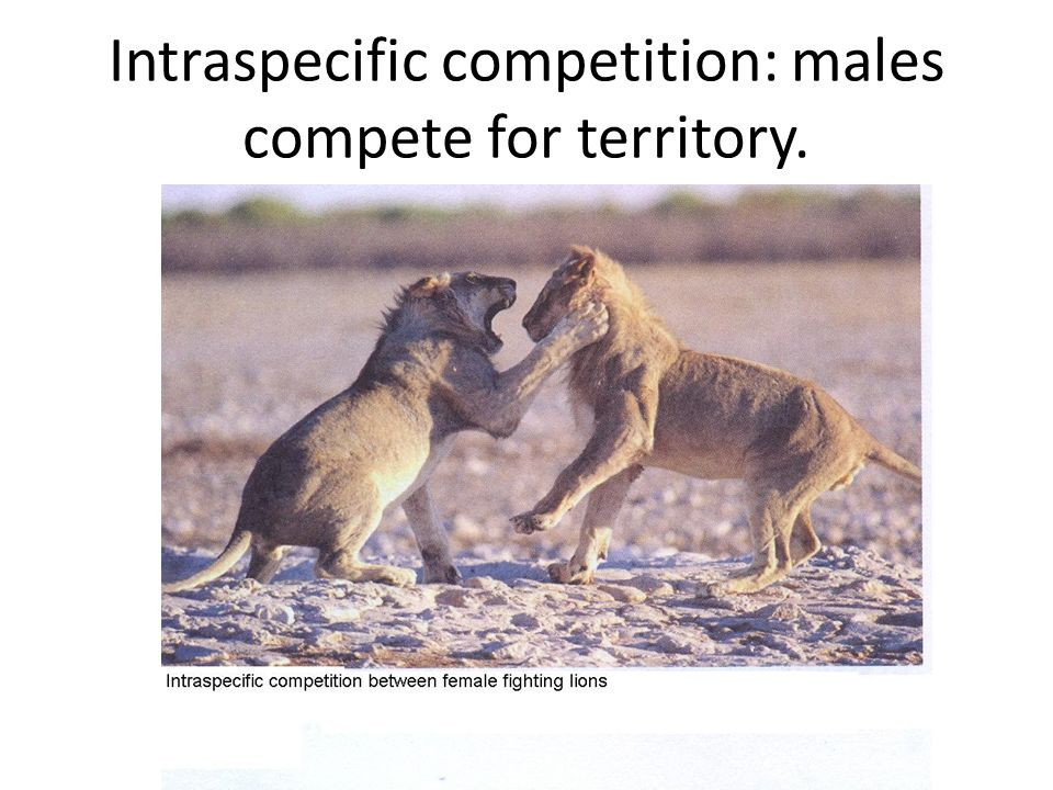 animals competing for territory - 960×720