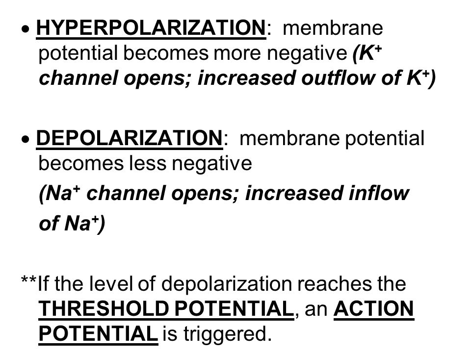  HYPERPOLARIZATION: membrane potential becomes more negative (K+ channel opens; increased outflow of K+)