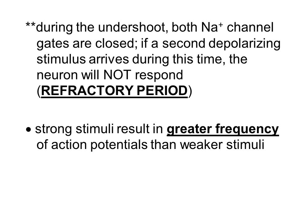 **during the undershoot, both Na+ channel gates are closed; if a second depolarizing stimulus arrives during this time, the neuron will NOT respond (REFRACTORY PERIOD)