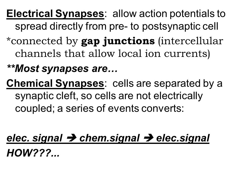 Electrical Synapses: allow action potentials to spread directly from pre- to postsynaptic cell