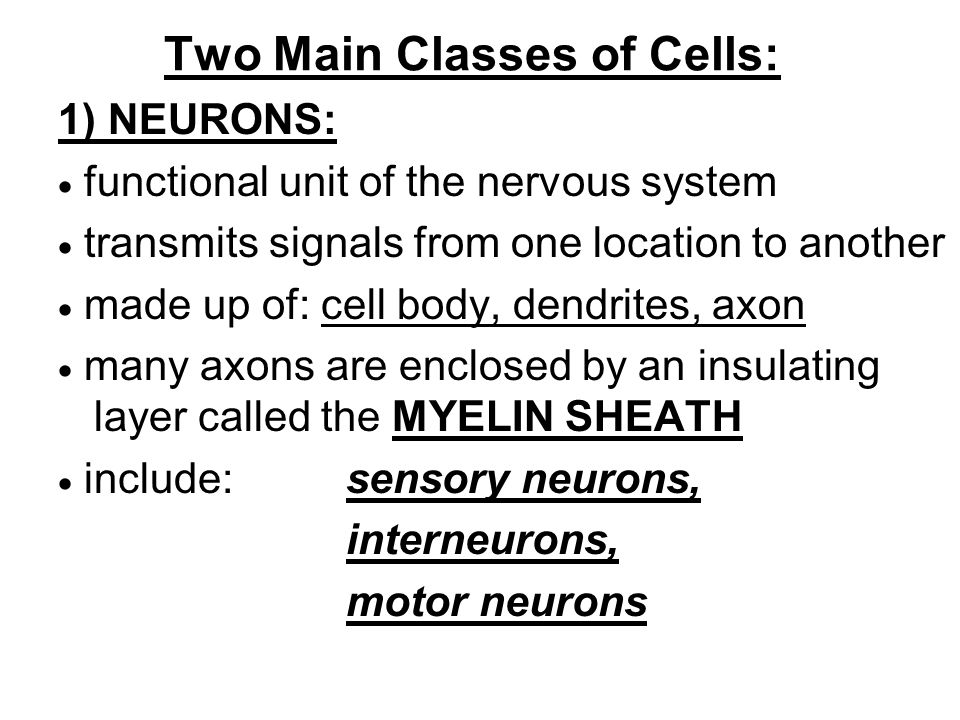 Two Main Classes of Cells: