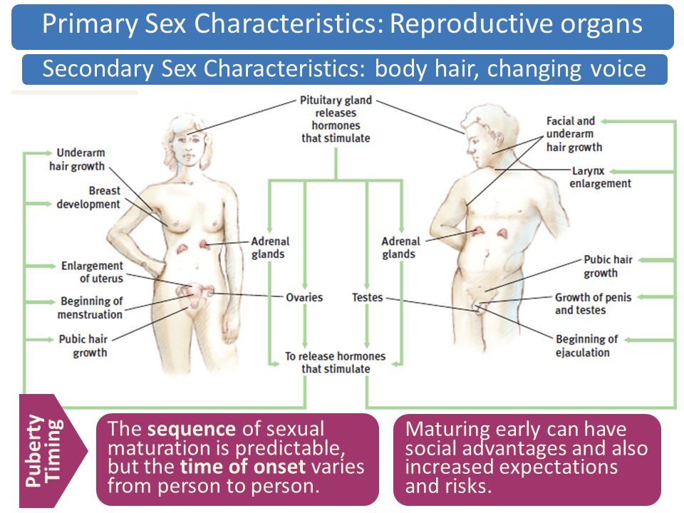 Primary and secondary sexual characteristics in humans