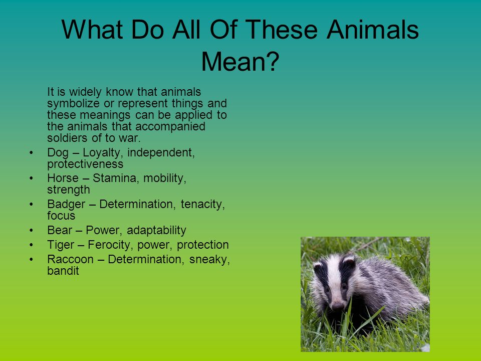 Animals And The Civil War Ppt Video Online Download