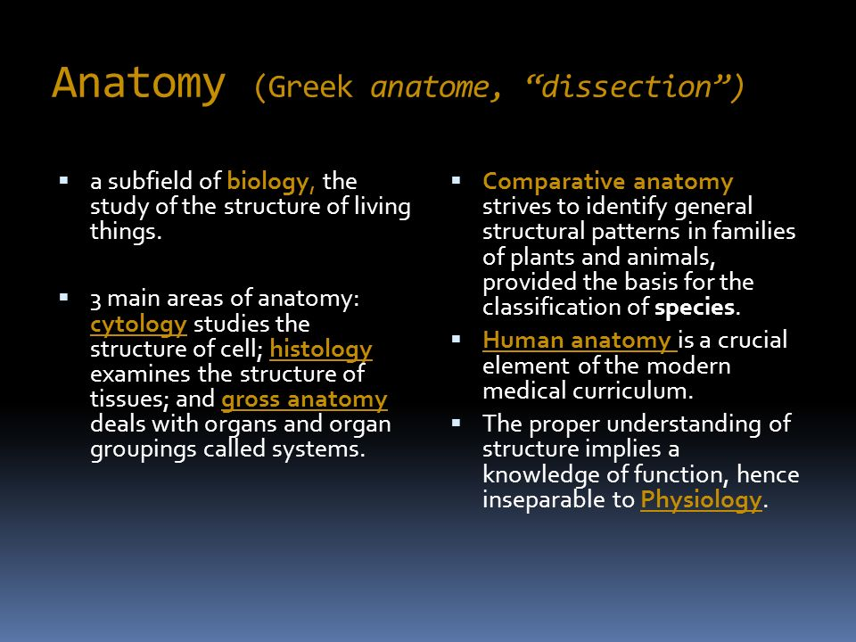 History and branches of Anatomy - ppt video online download