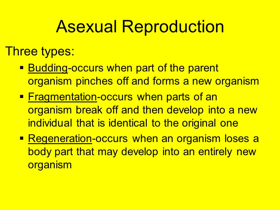 What are three types of asexual reproduction foto 84