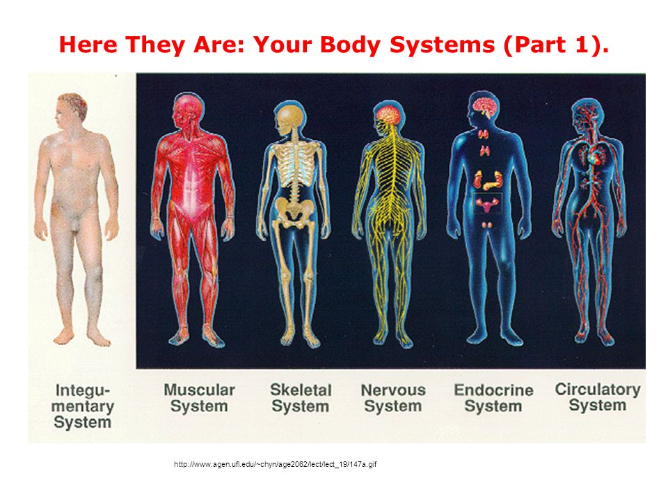 Human Body Systems Technology Project - ppt download