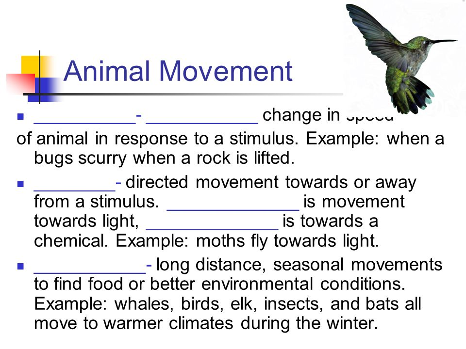 Animal Movement __________- ___________ change in speed
