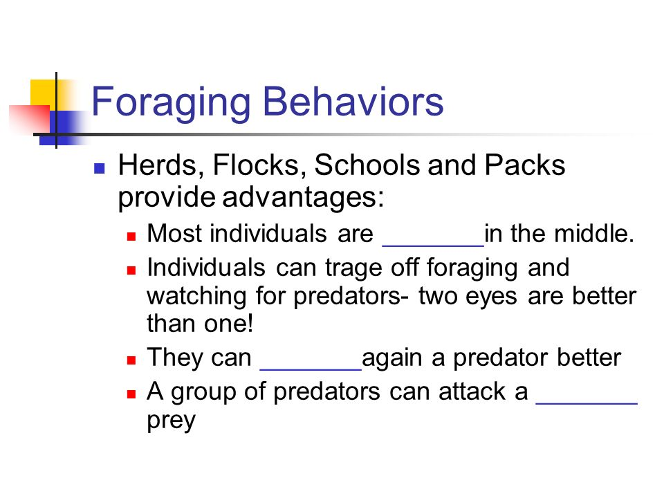 Foraging Behaviors Herds, Flocks, Schools and Packs provide advantages: Most individuals are _______in the middle.