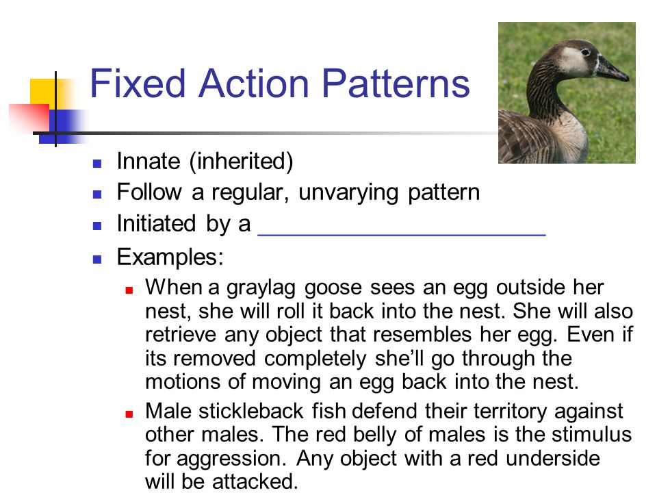 Fixed Action Patterns Innate (inherited)