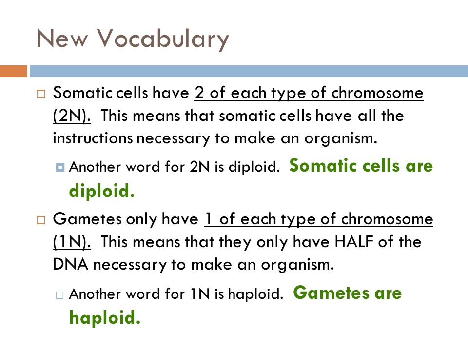 Meiosis Catalyst What Type Of Cells Does Mitosis Occur In Ppt