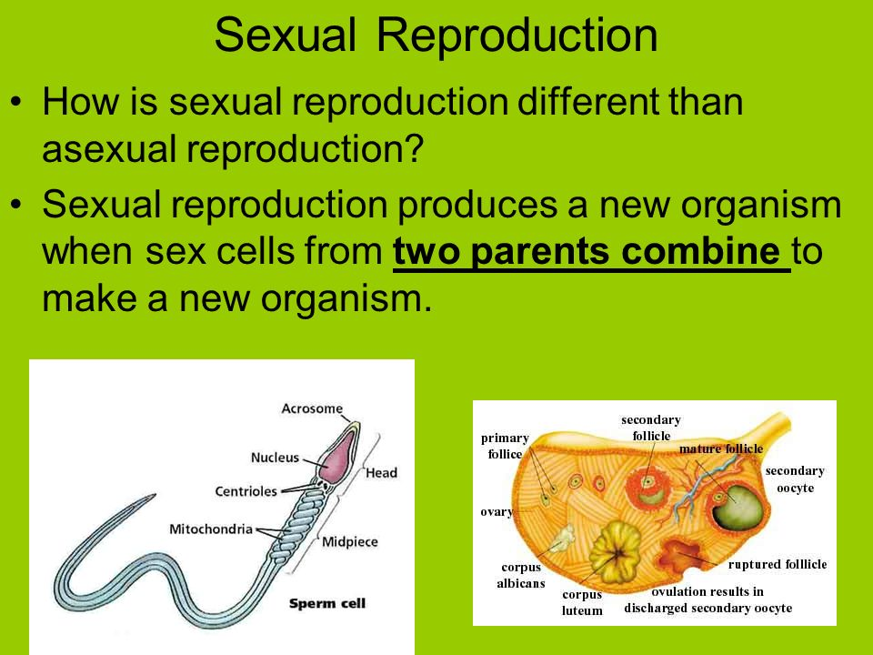 Sexual reproduction subtypes
