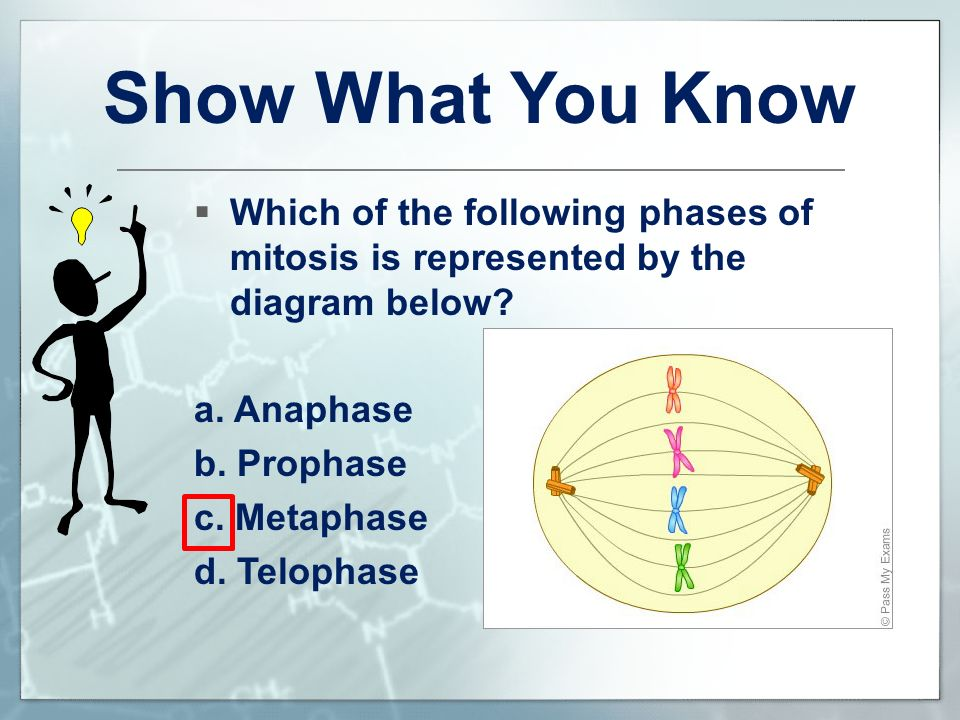 Cell division sc912l compare and contrast mitosis and meiosis and show what you know which of the following phases of mitosis is represented by the diagram ccuart Choice Image